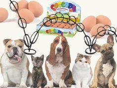 Uova for pets Coccodè, uova di gomma che rimbalzano all'impazzata, per cuccioli di cane o gatto, a seconda delle preferenze e delle presenza in casa. Schizzare in ogni angolo diventa un gioco di famiglia. Da Number One for Pets.  Number One for Pets Via Vigevano n. 1 20123 Milano Tel. 02 58105546 Aperto da lunedì a sabato dalle 8.30 alle 19.30