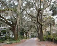 Beaufort and the Spanish moss.