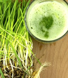 A wheatgrass smoothie packs a big nutritional punch on its own if you don't mind the taste. To improve the taste get some other dietary ingredients Liver Cleanse Juice, Smoothie Packs, Juice Smoothie, Fat Burning Smoothies, Fiber Rich Foods, Juicing Benefits, Juicing For Health, Wheat Grass, Healthy Vegetables