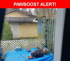 Is this your lost pet? Found in Portland, OR 97232. Please spread the word so we can find the owner!  White spot on chest, very scared  Nearest Address: Near halsey