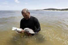 A baby dolphin with its umbilical cord still attached was found beached near Montevideo city, Uruguay. Luckily, a rescue organization got involved and and has been nursing the little guy back to health. These picture might just kill you.