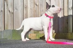Beertje with her Hot Pink collar