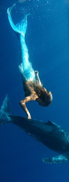mermaid swimming with dolphins Real Mermaids, Mermaids And Mermen, Mythical Creatures, Sea Creatures, Mermaid Swimming, Mermaid Tale, Siren Mermaid, Mermaid Pictures, Merfolk