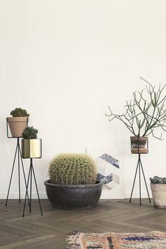 kleines pflanzenstander wohnzimmer kühlen abbild oder fdcbdfcbbcacecc plant stands