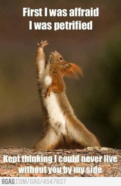 Dramatic Squirrel is dramatic. Can we give it a meme role?