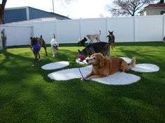 FieldTurf artificial grass is the perfect solution for commercial pet care facilities seeking an answer for their doggy play areas.  Dogs stay clean, your facility stays clean and dog owners are happy when they pick up their clean dog at the end of the day.   #alternascapes