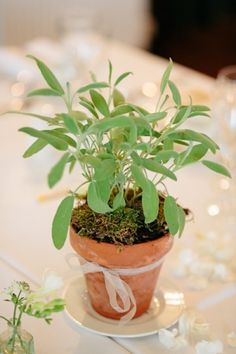 Different herbs as table place-marks english wedding ideas