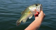 Fishing Guide on Lake Okeechobee Does It Different - Wide Open Spaces