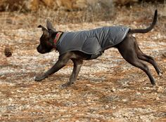Ruffwear Quinzee™ Insulated Dog Jacket