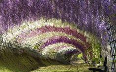 Çiçek Tüneli, Japonya