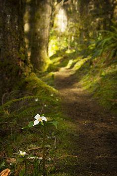 unwrittennature: Mossy Trails (by PatT&5)