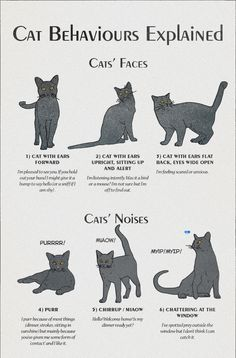 • cats infographic infographics life hacks americaninfographic •