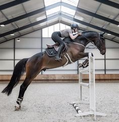 Cute Horse Pictures, Beautiful Horse Pictures, Horse Photos, Beautiful Horses, Big Horses, Cute Horses, Pretty Horses, Horse Love, Show Jumping Horses