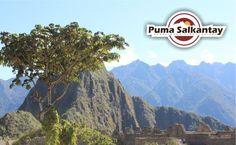 About Puma Salkantay