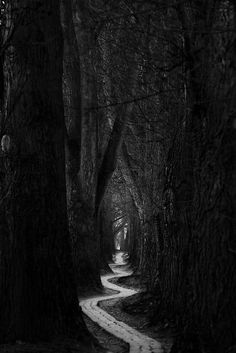 Gorgeous photo. Reminds me of the winding paths we all take through life--how…