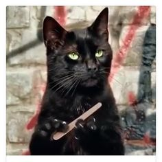 Salem - #Salem #SabrinaTheTeenageWitch #CurrentMood #Mani #Manicure #Nails #BlackCat #Kitty #Alternative #Macabre #Creepy #CreepyCool #CreepyGirlsClub #Goth #Gothic #GothLife #GothGirl #Gothabilly #Emo #Vamp #Vampabilly #Psychobilly #Punk #Halloween #ImNotBadLuck