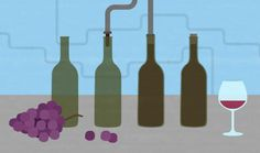 A step-by-step illustrated guide on how wine is made.