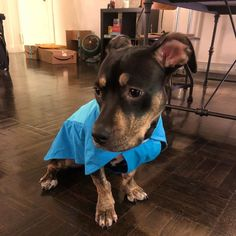 Choosing a Good Commercial Dog Food I luv my new raincoat! Now I just some booties to keep my paws dry! Anyone have suggestions? Pedigree Dog Food, Dog Food Recall, Food Recalls, Dog Food Brands, Dog Diet, Raw Food Diet, Homemade Dog Food, Food Allergies, Cat Food