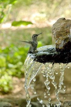 *Love it when hummingbirds hover and bathe while I water in the evening.