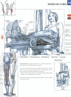 Seated leg Curls | Repinned www.pinterest.com/muskelfarm/