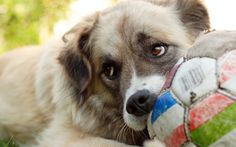 this isn't your ball, this is my ball, don't mess with my ball.