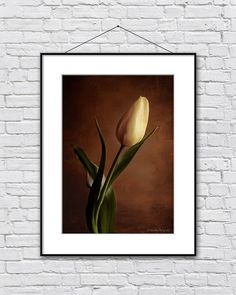 Flower photography tulip photograph wall by IonAnthosPhotography