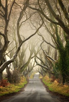 The Dark Hedges in Co Antrim, Northen Ireland. The Dark Hedges is an avenue of The Dark Hedges in Co Antrim, Northen Ireland. The Dark Hedges is an avenue of 300 year old beech trees. White Photography, Landscape Photography, Nature Photography, Digital Photography, Exposure Photography, Monochrome Photography, Photography Ideas, Beautiful Places, Beautiful Pictures