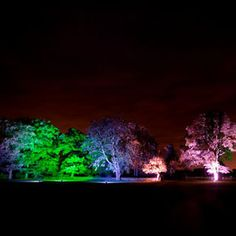 Colourful outdoor tree lights - evening party - bonfire wedding - evening event