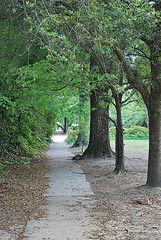 Summerville, SC sidewalk Close your eyes & you can feel the warm air and smell the jasmine.