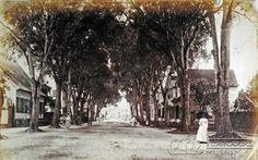Heerenstraat in Paramaribo met mahoniebomen Datum: ca. 1903 Locatie: Paramaribo, Suriname Vervaardiger: Inv. Nr.: 73A-78 Fotoarchief Stichting Surinaams Museum
