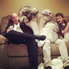 Just One Of The Guys <> Big dogs are even better when they think they're people. How cute is this?