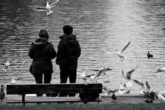 A couple feeding the birds at the lake in Hampstead Heath, a large and ancient park in London.