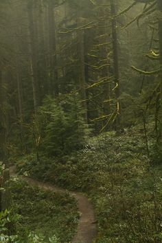 accio-forest:  Go on take a walk through the Silver Falls State Park - you know by Anna Calvert