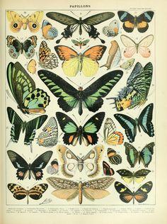DIY Vintage Poster Frame, for my office botanical prints Vintage Butterfly, Butterfly Design, Butterfly Print, Butterfly Artwork, Butterfly Project, Butterfly Images, Butterfly Frame, Diy Poster, Retro Poster
