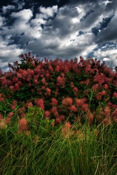 Nature's choice by Beniamin Sabo on Tree Mushrooms, Grass, Mountains, Landscape, Nature, Flowers, Travel, Color, Scenery