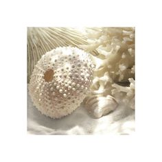 Coral art prints and canvases - Framed Art, Canvas Art & Art Prints Online > Magnolia Box (140 HRK) found on Polyvore