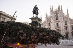 Il vecchio abete è arrivato a Milano, in piazza Duomo, scortato dalla polizia, all'alba del 27 novembre con un trasporto eccezionale.