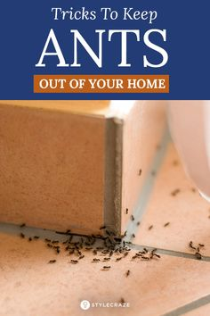 How To Get Rid Of Ants In Your Home: If youve always been on a lookout to find ways to evict these unwelcome guests then you definitely need to read further. We have a few tricks to keep these ants out. House Cleaning Tips, Cleaning Hacks, Cleaning Recipes, Cleaning Products, Ants In House, Get Rid Of Ants, Bees And Wasps, Pest Management, Humming Bird Feeders