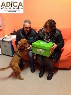 Toldo del canile @ADICA_Onlus con la sua nuova famiglia! @mysocialpet_it #SwifferEffect