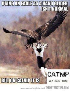 On catnip it is…