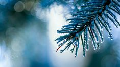 Morning Blues by kimberleigh Vancouver, Blues, Magical Forest, Windows, Nature, Photos, Wreaths, Outdoor, Beauty