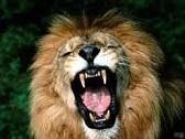 http://www.tuttogratis.it/attualita/animali_che_attaccano_l_uomo_video_shock/