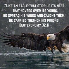 Deuteronomy Like an eagle that stirs up its nest, That hovers over its young, He spread His wings and caught them, He carried them on His pinions. Biblical Quotes, Religious Quotes, Bible Verses Quotes, Bible Scriptures, Faith Quotes, God Prayer, Prayer Quotes, Bible Truth, Favorite Bible Verses