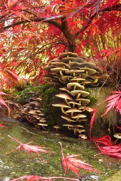 Enter our autumn colours photo contest Vibrant Colors, Autumn Colours, Photo Contest, Cool Photos, Photography, Pageant Photography, Photograph, Vivid Colors, Photography Challenge