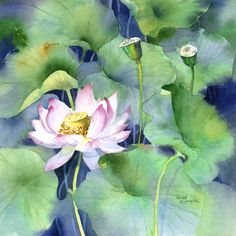 Lotus Blossom by Rachel McNaughton - Watercolour Painting - Mini Gallery Watercolor And Ink, Watercolour Painting, Watercolor Flowers, Painting Flowers, Watercolors, Art Floral, Lotus Flower Pictures, Lily Pond, Fashion Painting