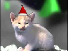 Miauwende kerst katten