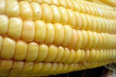 GMO FAIL: Worm Thrives in GM Corn Designed to Kill It: http://onegr.pl/1hHslCg