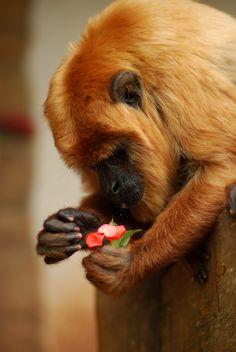 "Monkey.    "":O)"