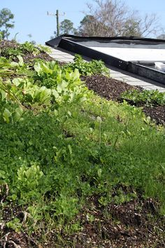 Living Green Roofs!: Green Roof Gardening and Small Scale Rooftop Permaculture