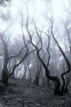 oh...my....god!!!  no no scary trees!